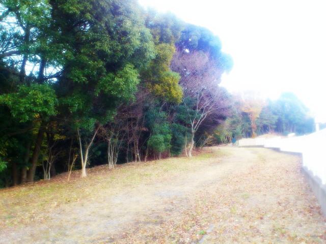 水城ゆめ広場2_1.JPG