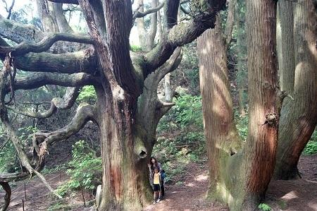 高森殿の杉15 - コピー.JPG