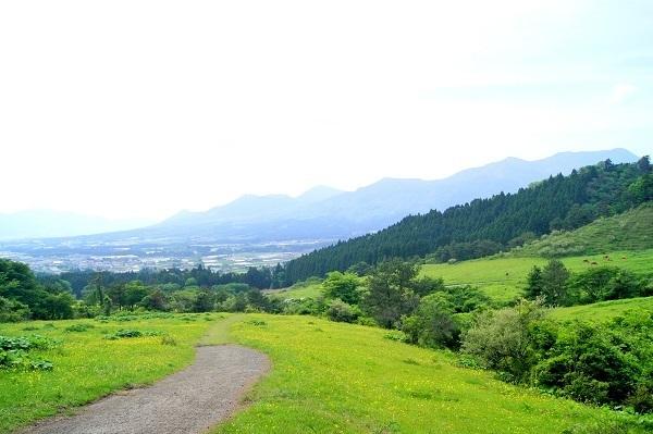 高森殿の杉3 - コピー.JPG
