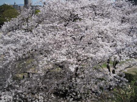maizuru5.jpg