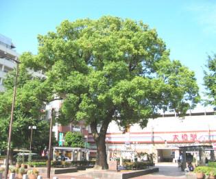 ohashikusu1.jpg