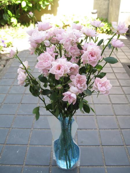 rose1_1.jpg