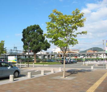 shirakibaru.jpg