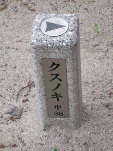 wakamiyajinjya21.jpg