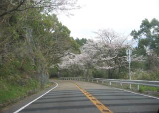 yakigome4.jpg