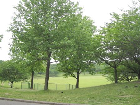 春日公園4_1.jpg