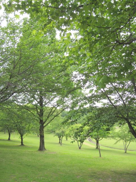 春日公園6_1_1.jpg